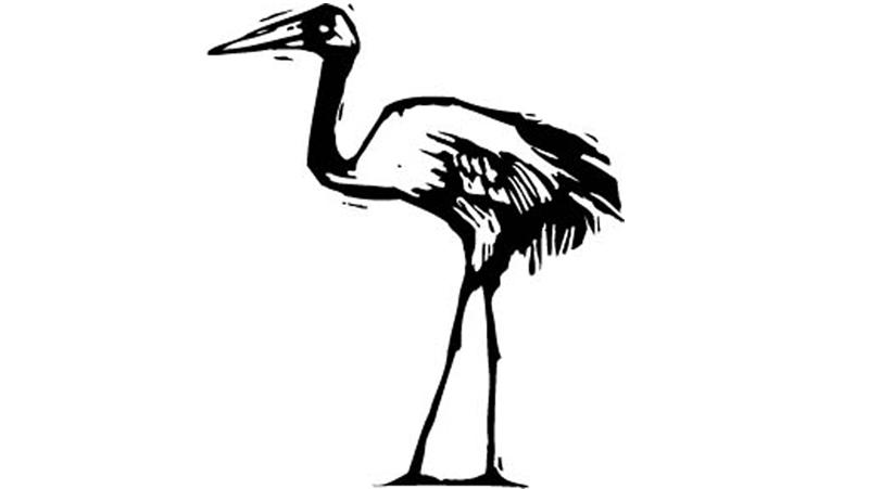 Crane Cam in Kearney Archives - Jon Schallert